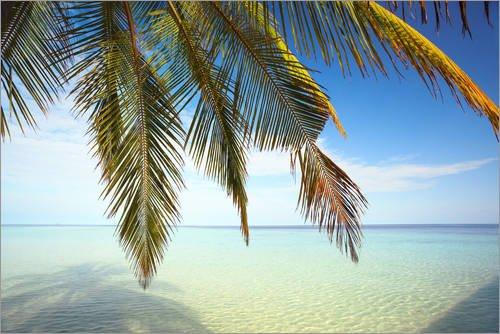 Posterlounge Alu Dibond 150 x 100 cm: Palme und Ozean, Malediven von Matteo Colombo