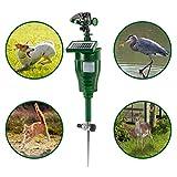 Gardigo Solar-Wasser-Tiervertreiber, Reiherschreck, Vogelscheuche, Hunde-Katzen-Tierschreck - 2