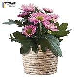 Aufkleber Vinyl Blume Topf Lila Blüten Pflanzen