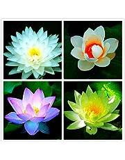 Green Gardens Rare mixed color Seed 15 seeds Bowl Lotus Flower water Aquatic Plants Nelumbo Nucifera