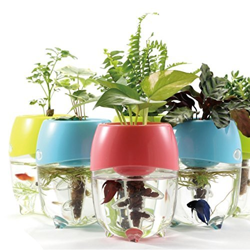 aquaponic-fish-tank-aquarium-for-betta-fish-with-water-garden-planter-top-lid-natural-ecosystem-for-