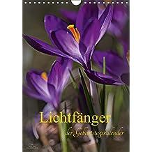 Lichtfänger (Wandkalender 2017 DIN A4 hoch): Wunderschöne Lichtmomente - Die Welt der Blumen und Pflanzen in sehr zarten lichtdurchfluteten Detailaufnahmen (Geburtstagskalender, 14 Seiten )