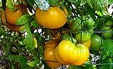 AGROBITS Basso Pomodoro Giallo - dolce polpa Ro aromatizzato Pomodoro Giallo - 10 Semi