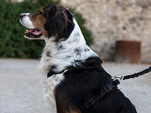 Pettorina per cani di piccola e media taglia imbracatura cane
