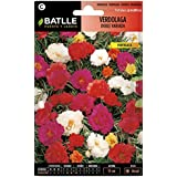 Semillas de Flores - Verdolaga doble variada - Batlle