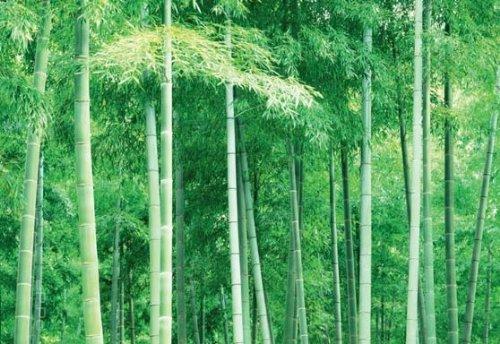 posterdepot Fototapete Bambus-Wald in Asien - Größe 366 x 254 cm, 8-teilig
