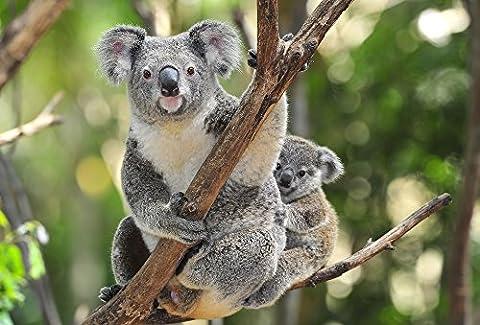 Animal-carte postale animaux en australie : kOALA-mAMA et bébé
