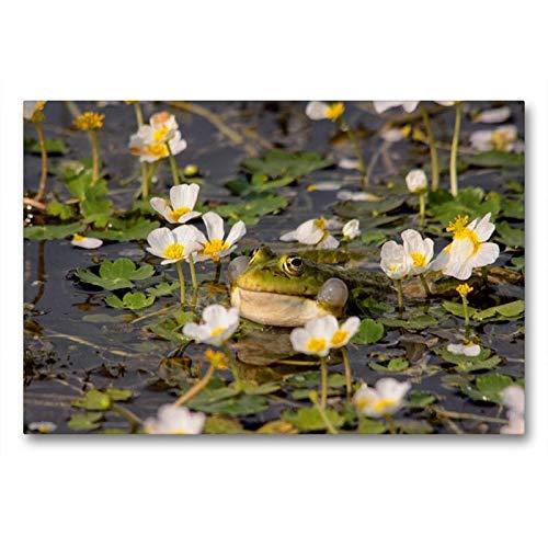 Premium Textil-Leinwand 90 x 60 cm Quer-Format Wasserhanenfuss | Wandbild, HD-Bild auf Keilrahmen, Fertigbild auf hochwertigem Vlies, Leinwanddruck von Winfried Erlwein