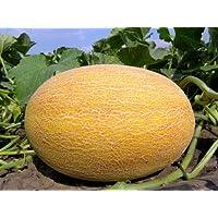 ScoutSeed Semillas de melón Amal F1 semillas orgánicas de Ucrania