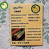 VISTARIC Originalverpackung Citronella, Lemon Grass Seeds ein starker Zitronengeschmack Kräuter, Gewürze Samen 10pc / Bag