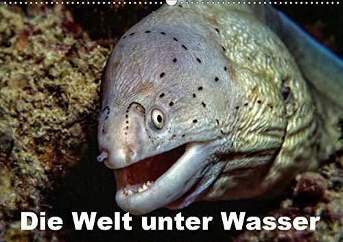 Die Welt unter Wasser (Wandkalender 2021 DIN A2 quer): Unterwasseraufnahmen von Meerestieren im Mittelmeer, Roten Meer und Indischen Ozean. (Monatskalender, 14 Seiten ) (CALVENDO Tiere)