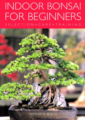 indoor-bonsai-for-beginners-selection-care-training