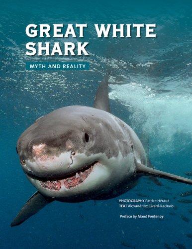 Great White Shark por Alexandrine Civard Racinais