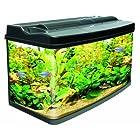 Cold Water Fish Tanks