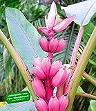 top 10 garten balkonpflanzen bestenliste lila pampasgras cortaderia selloana gartencenter. Black Bedroom Furniture Sets. Home Design Ideas
