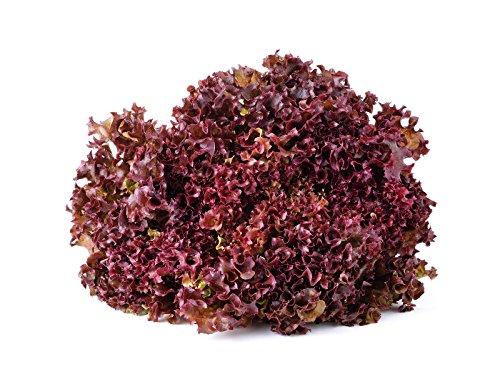 1110 Samen ORGANIC Red Salatschüssel Salat ~ gekräuselten Eiche förmige Blätter ~ Gartenpflanze