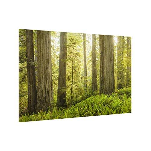 Bilderwelten Spritzschutz Glas - Redwood State Park Waldblick - Quer 2:3, HxB: 59cm x 90cm