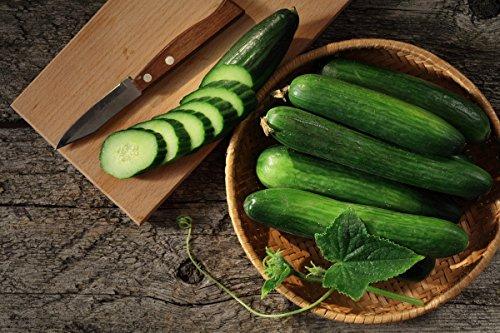 Concombre « F1 Saladin » - pour effet de serre et a la culture de couverture, fruits jusqu'a 35 cm de long - 32 graines