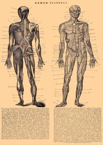 vintage-de-anatomia-el-cuerpo-humano-rusia-19th-century-250-gsm-brillante-art-tarjeta-a3-reproduccio