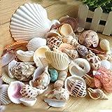 Starworld Beach Sea Shells, Mixed Natural SeaShells Craft Wedding Garden Aquarium Decoration/Random Sending