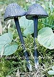 Pilze (Wandkalender 2018 DIN A3 hoch): Pilze: Vom Frühling bis in den späten Herbst findet man sie in Wäldern,Mooren und auf