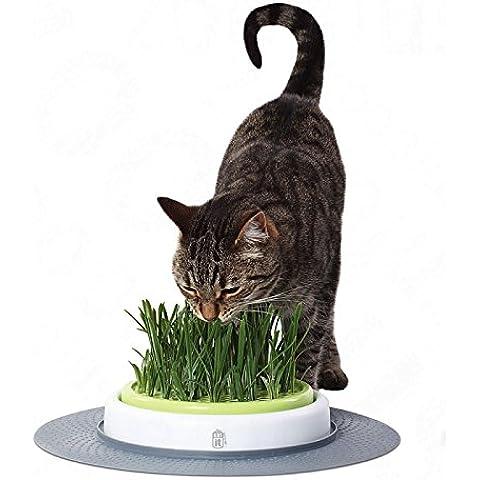 Wangado - Kit per la coltivazione igienica + 140 g di ricariche! e pulita dell'erba gatta, compreso tappetino per agopressione e erba gatta da coltivare; integrazione ideale della gamma Catit Design Senses