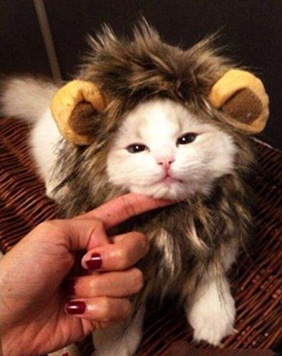 PRIMI Hund Katze Halloween Kleid Haustier Kostüm Löwe Mane Perücke (Halloween Kätzchen Kostüme)