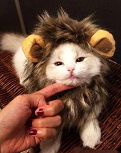 PRIMI Hund Katze Halloween Kleid Haustier Kostüm Löwe Mane Perücke ()