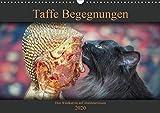 Taffe Begegnungen-Drei Waldkatzen auf Abenteuerreisen (Wandkalender 2020 DIN A3 quer)