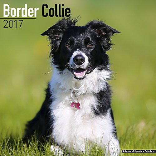 border-collie-calendar-2017