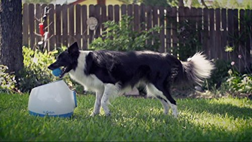 iFetch Too Automatic Ball Launcher for Larger Dogs 5
