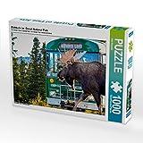Elchbulle im  Denali National Park 1000 Teile Puzzle quer: Alaska - faszinierend anders (CALVENDO Orte)