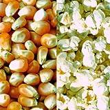Premium-Popcorn-Mais - 3