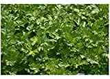 Organic Seeds - Best Reviews Guide