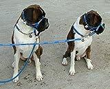 Dogmatic Hundehalfter, gepolstert, aus Netzstoff, Größe 3, Blau