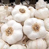 """Healthy 10 Garlic Seeds Cloves """"Solent Wight""""for giant bulbs & mild cloves ready to Grow"""