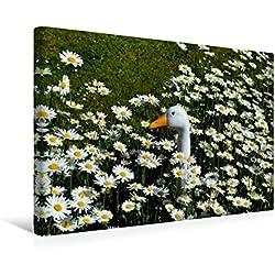 Calvendo Premium Textil-Leinwand 45 cm x 30 cm Quer, der Vergleich | Wandbild, Bild auf Keilrahmen, Fertigbild auf Echter Leinwand, Leinwanddruck Glaube Glaube