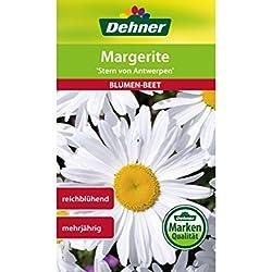 """Dehner Blumen-Saatgut, Margerite, """"Stern von Antwerpen"""", 5er pack (5 x 2 g)"""