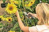 Bosch Elektro Gartenschere EasyPrune (USB Ladegerät, Blisterverpackung, 3,6 Volt, 1,5 Ah) Test