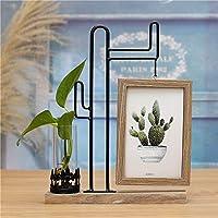 qucaojun Creative Hydroponics Photo Frame Zakka Micro Landscape Green Planting Decoración del hogar, Cactus Oscuro