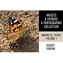 Insects & Arachnids: A Photographic Collection:  Amarillo, Texas: United States - Volume 1 (Arthropods of Amarillo) (English Edition)