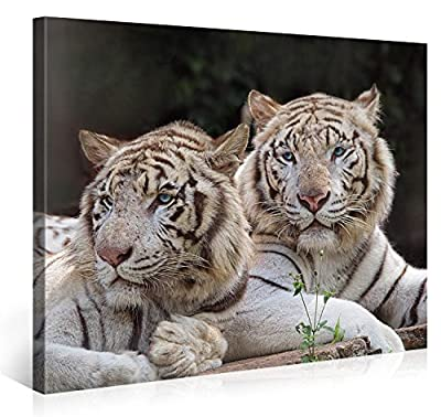 TWO WHITE TIGERS - Premium canvas art print Wall Decor - XXL Giclee Canvas Print, Wall Art Canvas Picture, Canvas picture stretched on a frame, Canvas image in High Definition