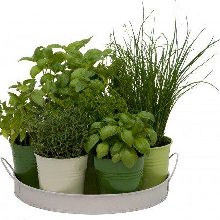 plateau-7-herbes-aromatiques