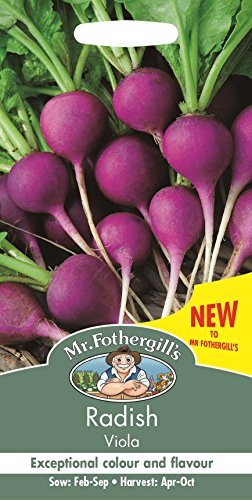 Mr Fothergills Gemüse Radieschen Viola 250 Samen