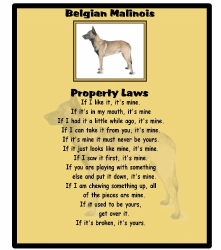 Belgian Malinois – Property Laws – Mouse mat