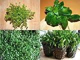 Vordergrundmix, 5 Töpfe Aquariumpflanzen für vorn