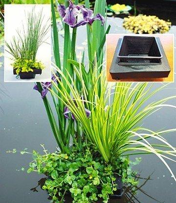 BALDUR-Garten Wasserpflanzen-Insel mit Schwimmring,1 Komplett-Set mit Wasserpflanzen und Teichpflanzen -