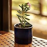 ExclusiveLane Dual Glazed Studio Pottery Garden & Balcony Planter Pot In Ceramic - Plant Containers Ceramic Pots Flower Pots For Garden Planter Box Ceramic Planter Living Room Decorative Flower Bowl Outdoor Living
