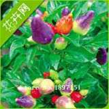 Heirloom Thai Sun Hot Pepper Capsicum Annuum Ornamental Chili Seeds, Professional Pack, 100 Seeds/Pack, Mini Hot Pepper Seeds