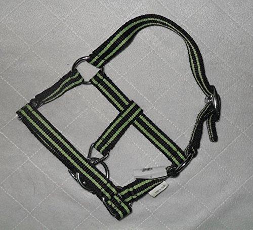 Miniline Shetty Nylonhalfter \'\'Petit\'\' 2-fach verstellbar chromfarbene Beschläge (Fohlen, schwarz-lime)